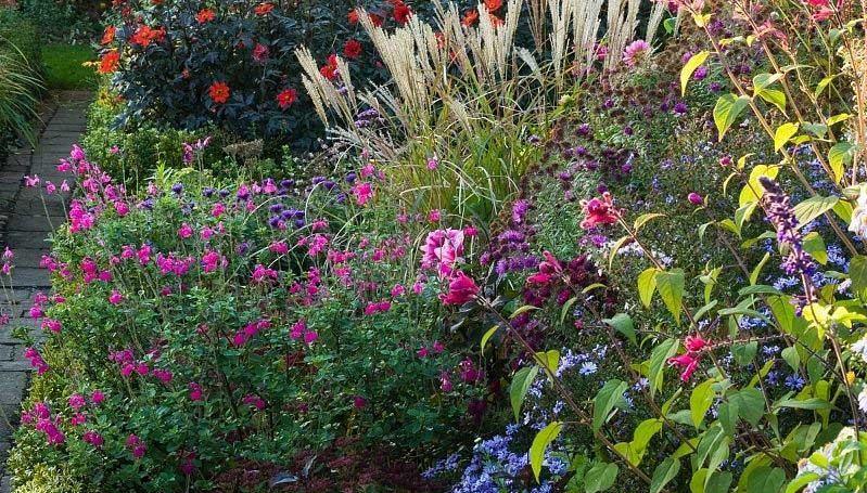 week-1-telemanns-garden